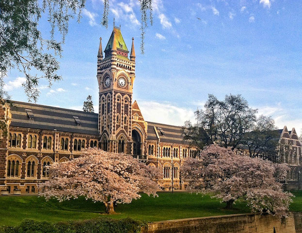 A beautifully ornate building surrounded by pink flowered trees on University of Otago's campus