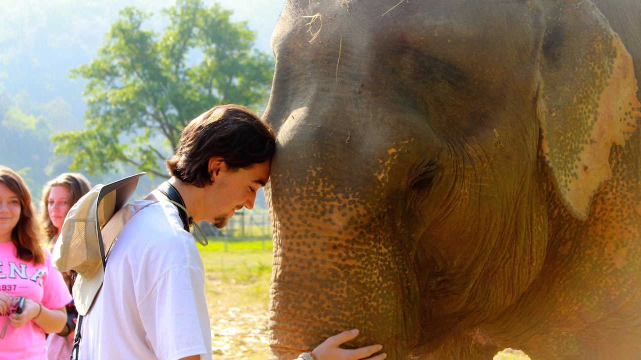 A male student bows his head to an elephant's trunk at Elephant Nature Park in Chiang Mai, Thailand