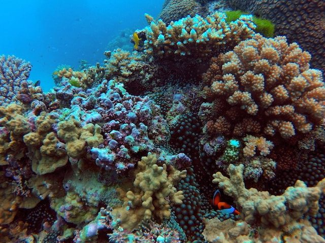 Beautiful coral underwater at the Great Barrier Reef