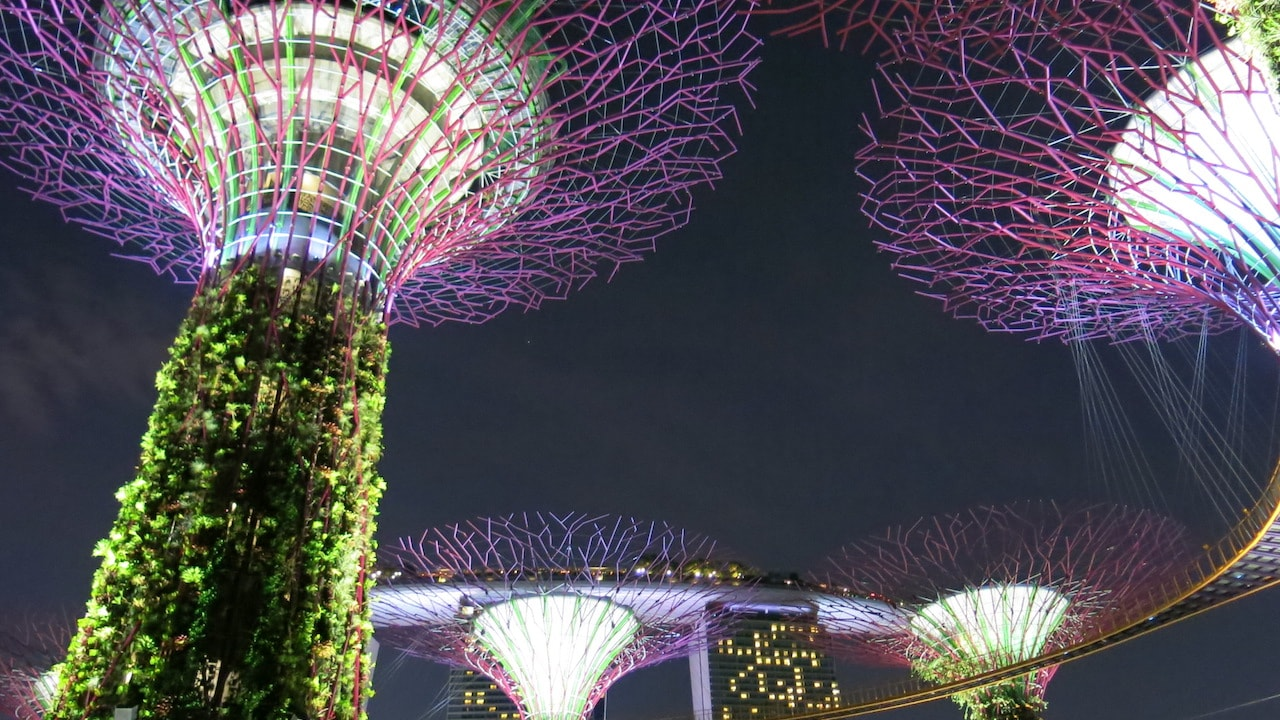 Colorfully illuminated Supertrees in Singapore at night